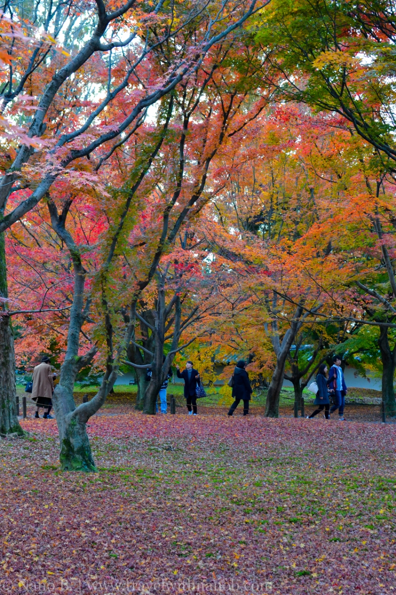 kyoto-autumn-leaves-74