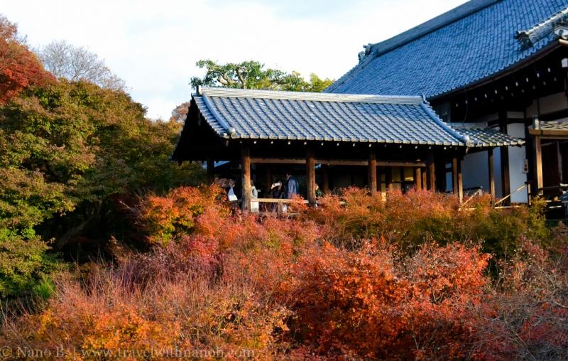 kyoto-autumn-leaves-77
