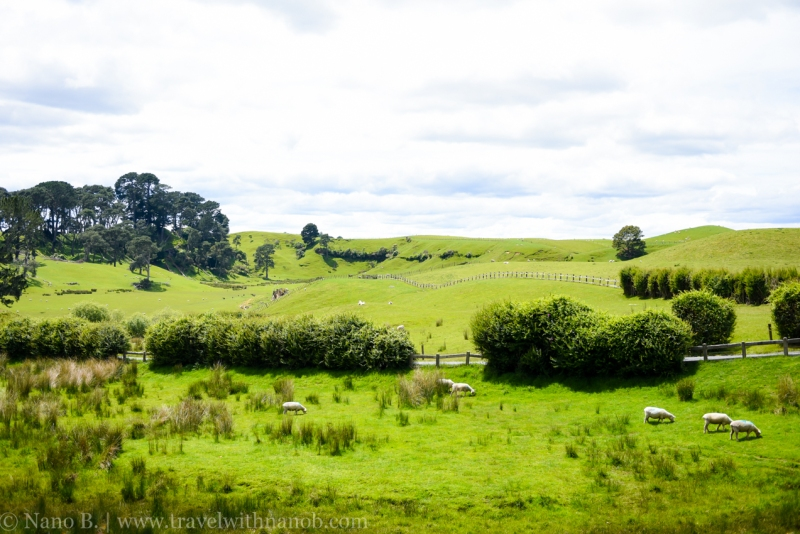 hobbiton-tour-auckland-new-zealand-50