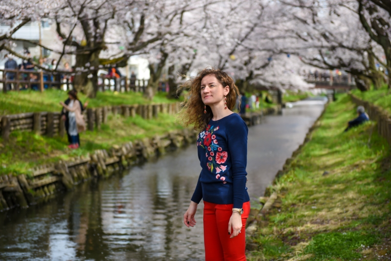 Kawagoe-Cherry-Blossom-39