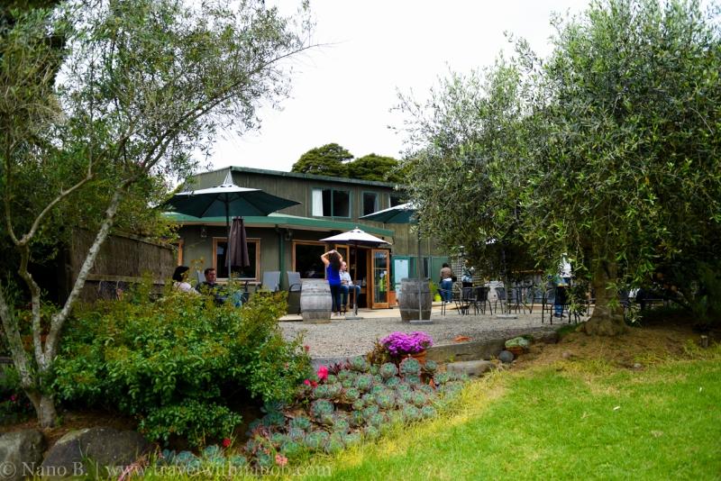 waiheke-island-wine-tour-17