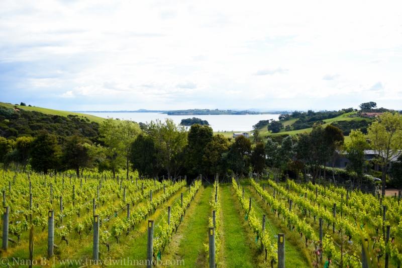 waiheke-island-wine-tour-45