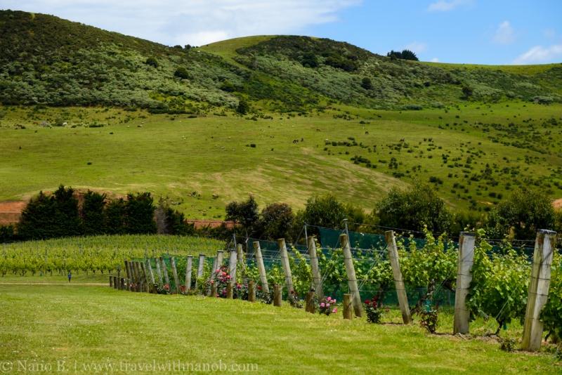 waiheke-island-wine-tour-8
