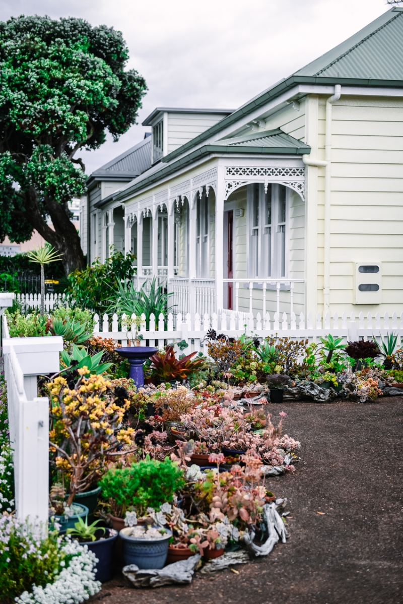 auckland-things-to-do-30