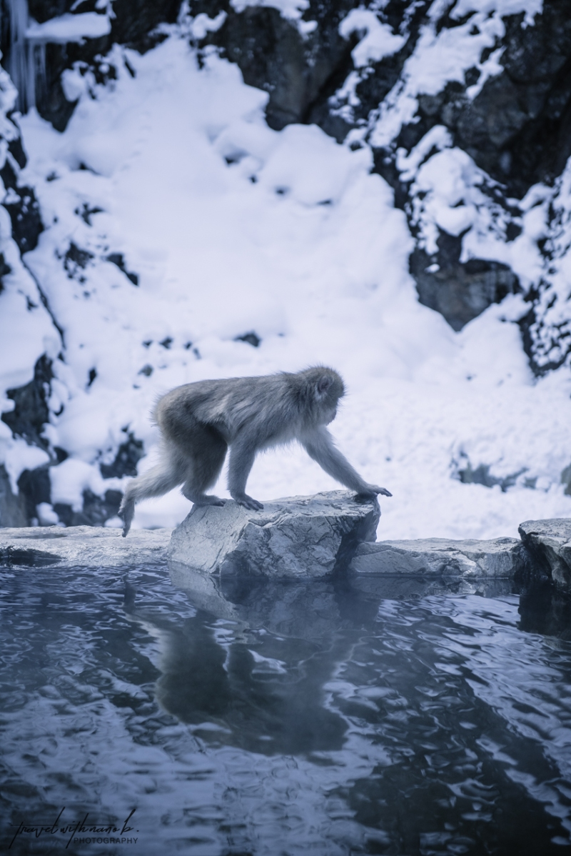 japanese-snow-monkeys-jigokudani-nagano-11