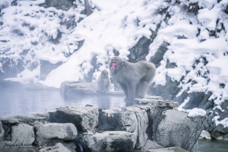japanese-snow-monkeys-jigokudani-nagano-22