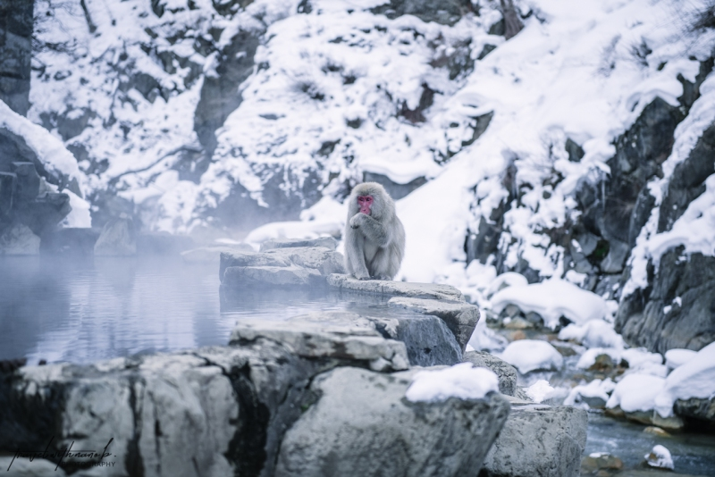 japanese-snow-monkeys-jigokudani-nagano-28