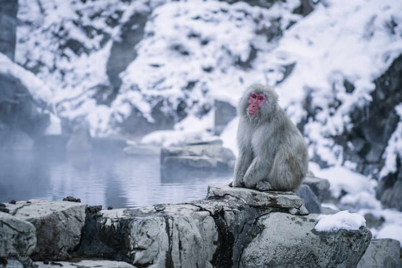 japanese-snow-monkeys-jigokudani-nagano-30