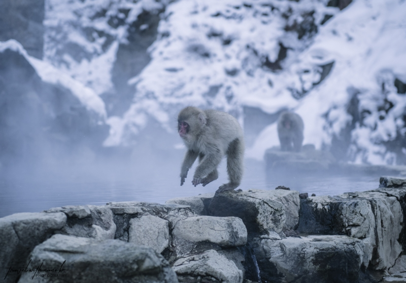 japanese-snow-monkeys-jigokudani-nagano-33