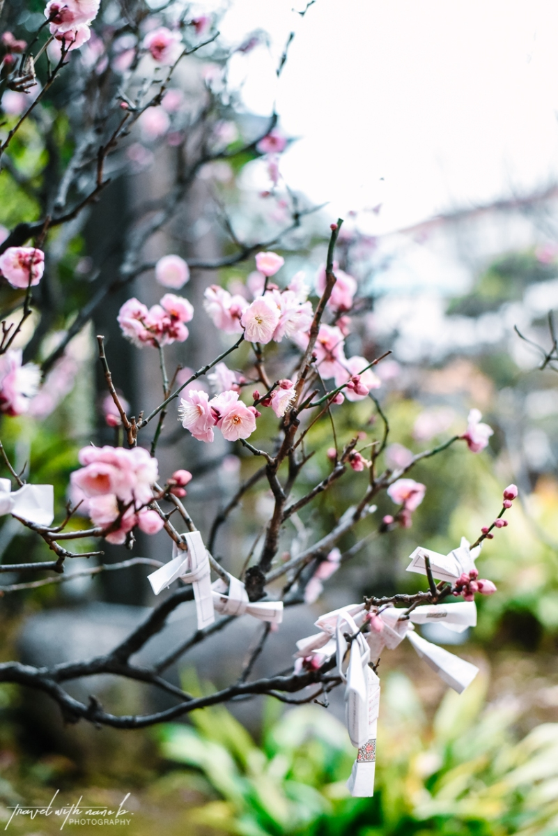 Best Spots to View Plum Blossoms in Tokyo