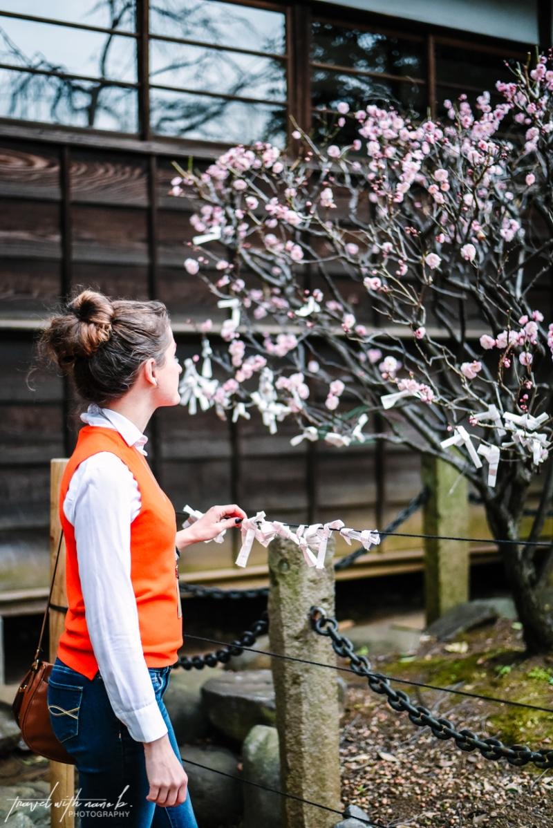 plum-blossoms-tokyo-5