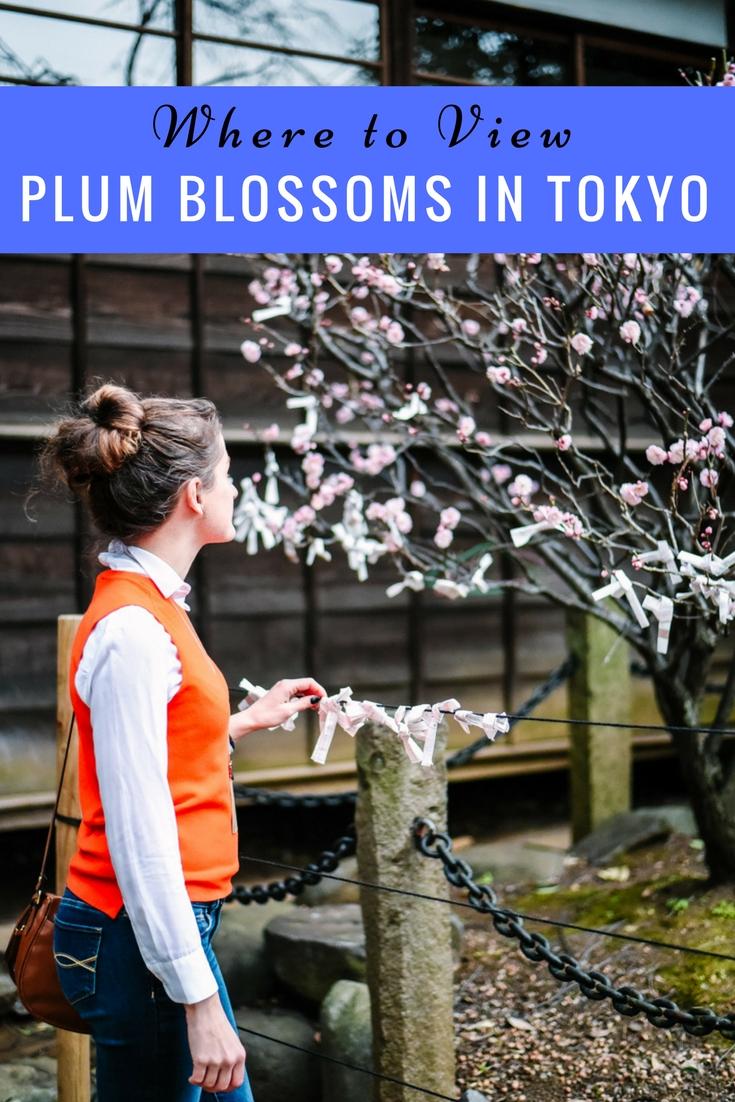 plum-blossoms-tokyo