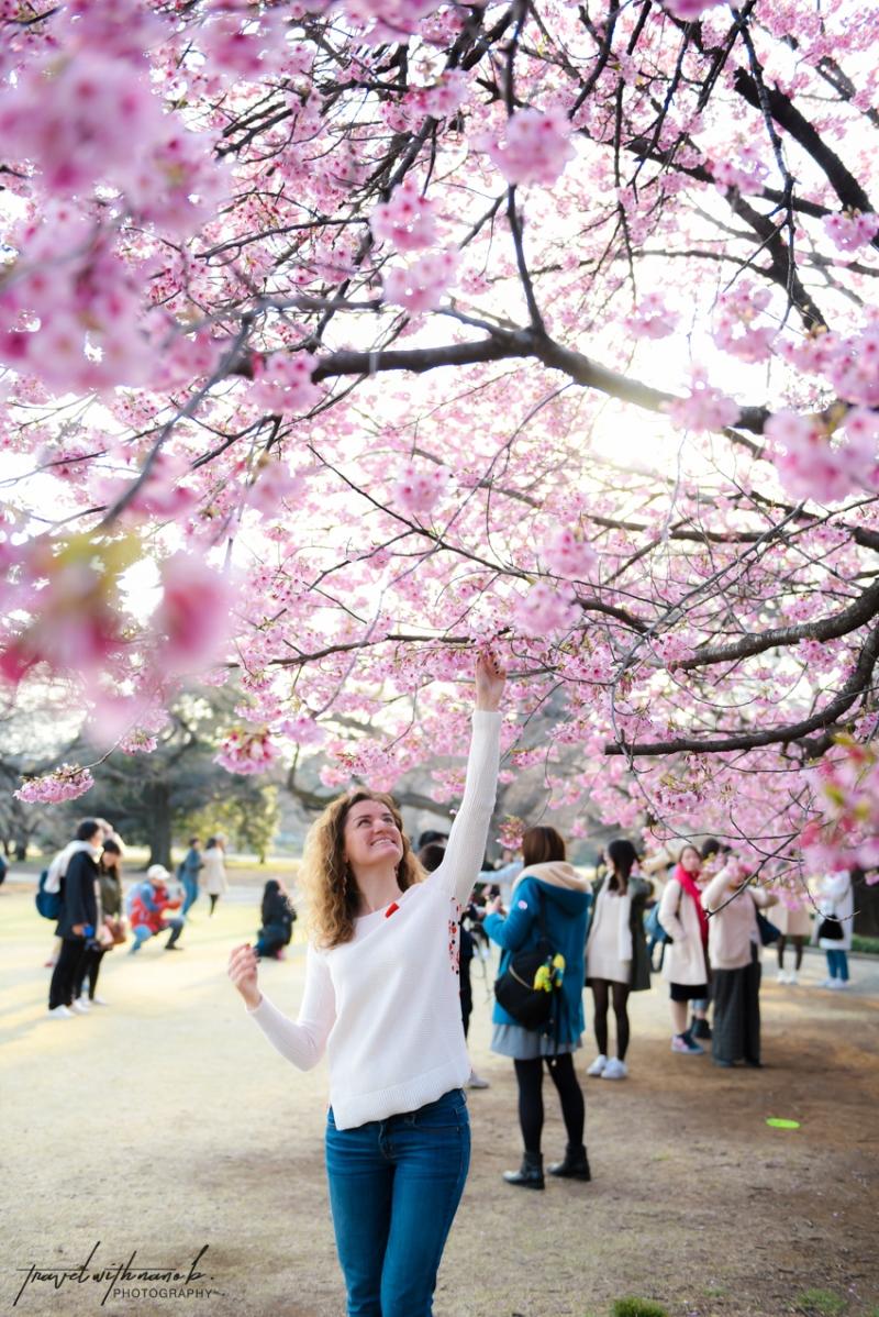 tokyo-best-cherry-blossom-spots-10
