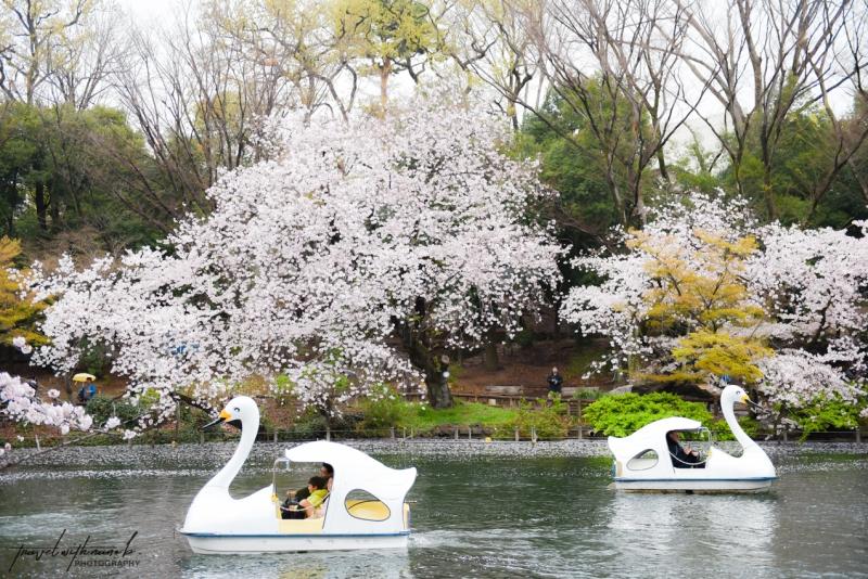 tokyo-best-cherry-blossom-spots-18