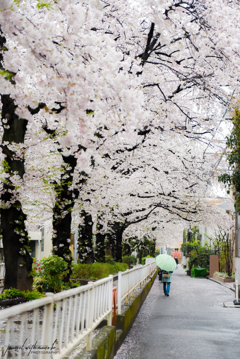 tokyo-best-cherry-blossom-spots-22