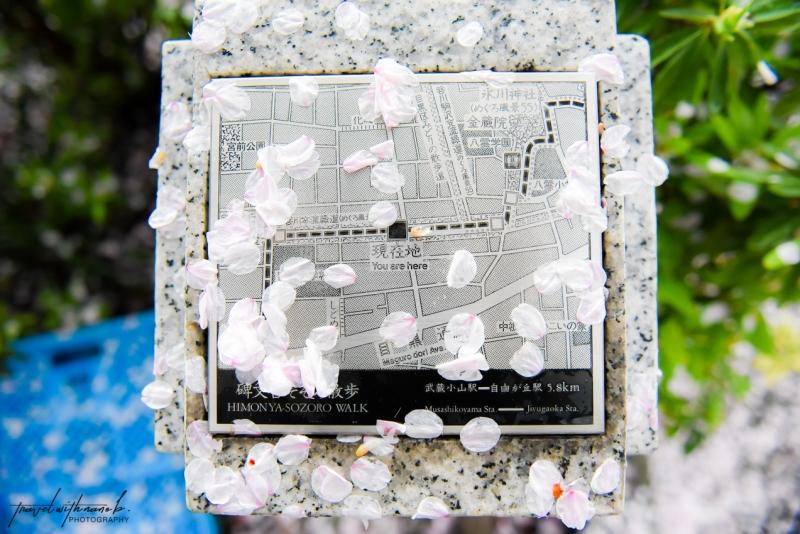tokyo-best-cherry-blossom-spots-23
