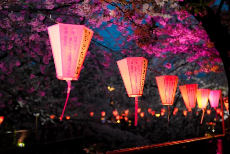 tokyo-best-cherry-blossom-spots-24