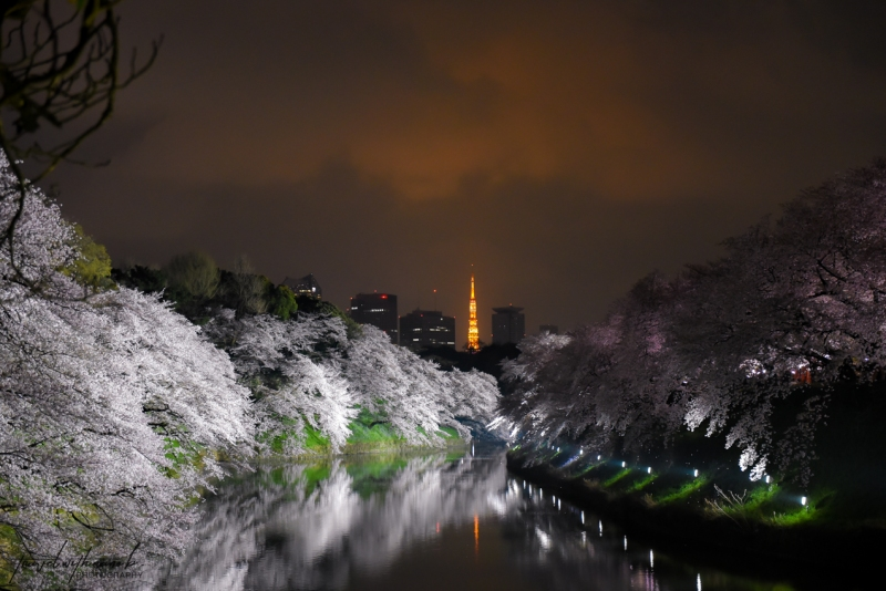 tokyo-best-cherry-blossom-spots-25