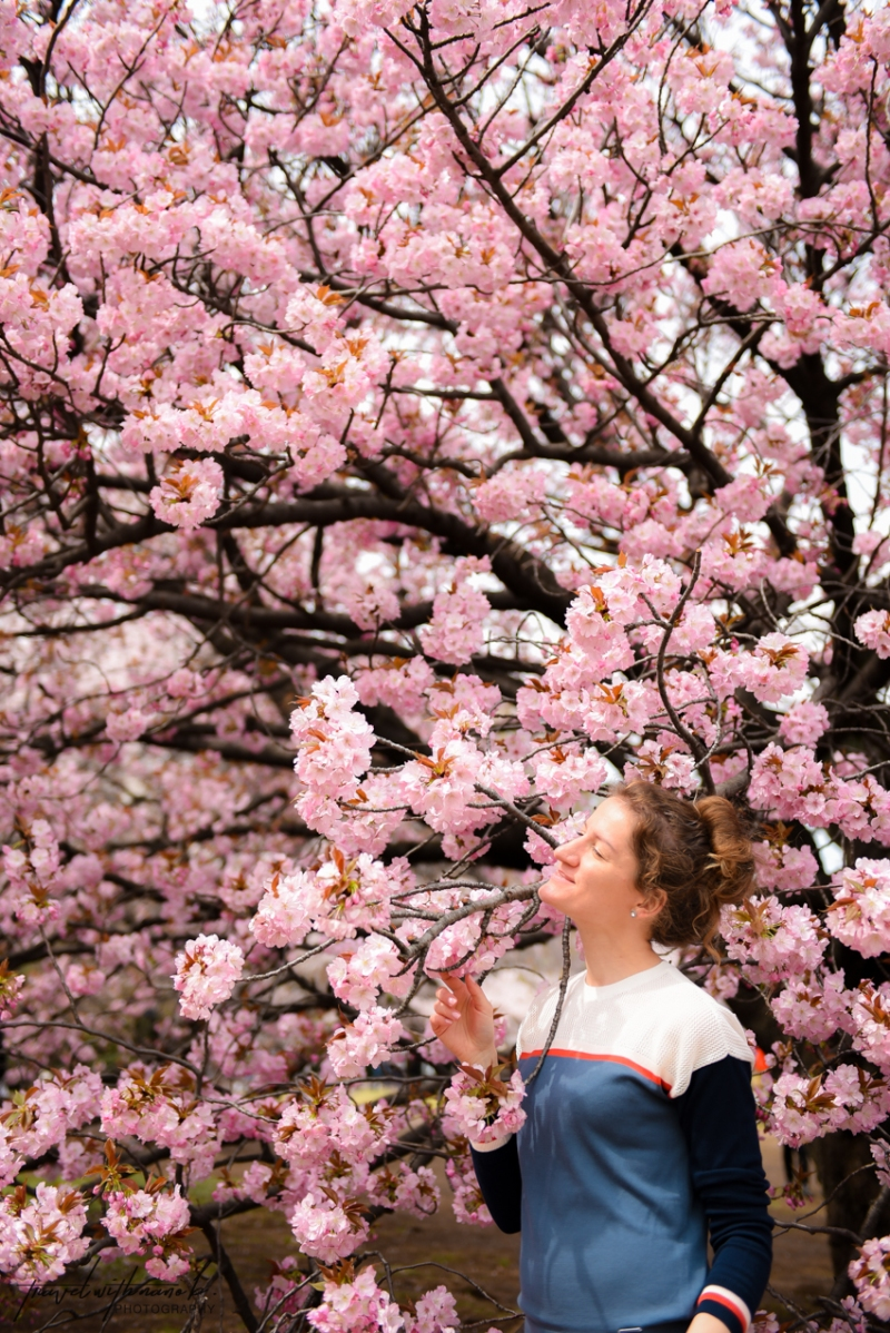 tokyo-best-cherry-blossom-spots-29
