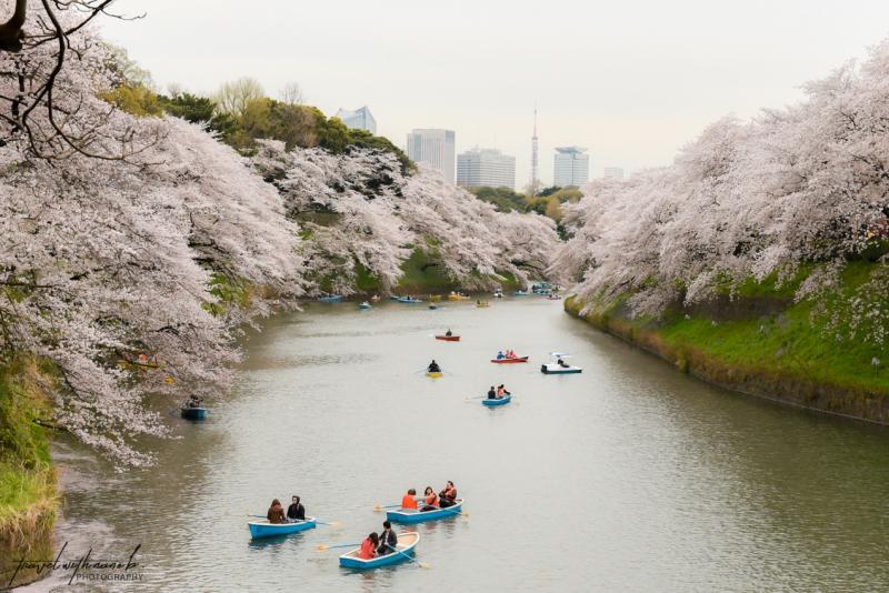 tokyo-best-cherry-blossom-spots-32