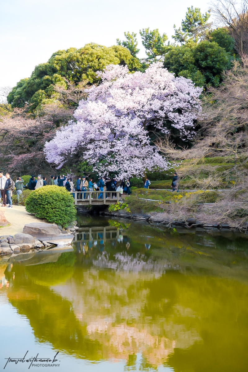tokyo-best-cherry-blossom-spots-7