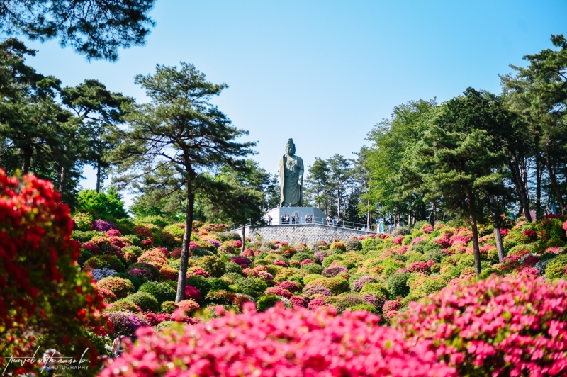 azalea-garden-shiofune-kannon-ji-temple-10