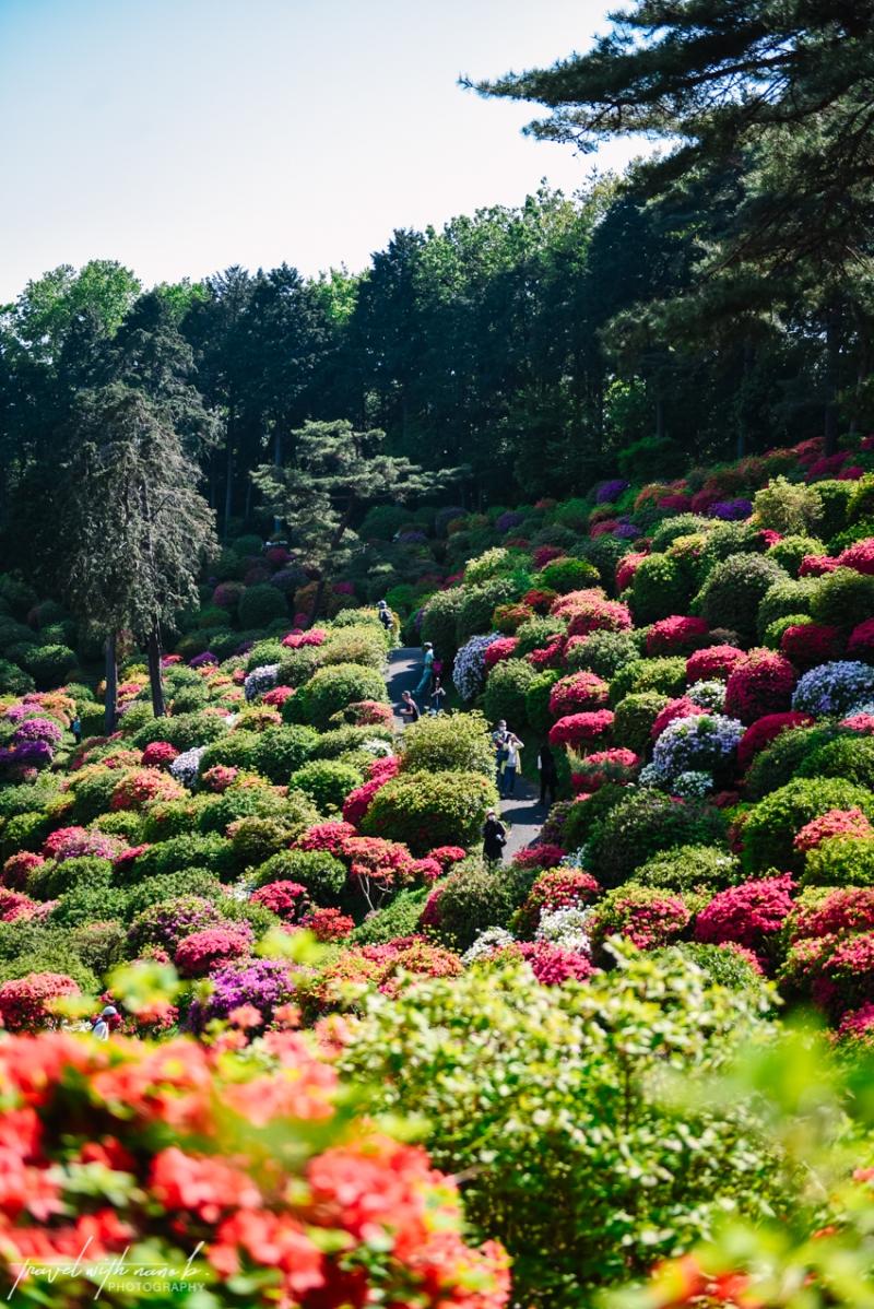 azalea-garden-shiofune-kannon-ji-temple-23