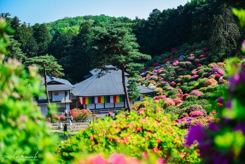 azalea-garden-shiofune-kannon-ji-temple-28