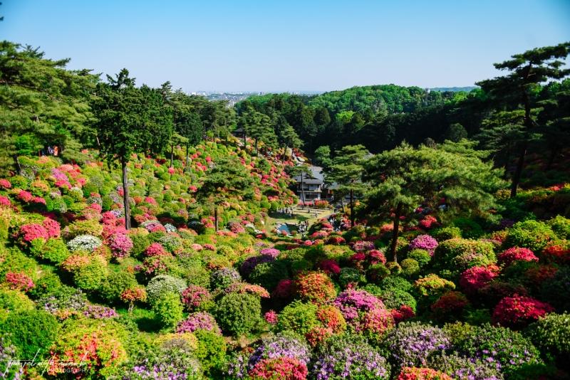 azalea-garden-shiofune-kannon-ji-temple-36