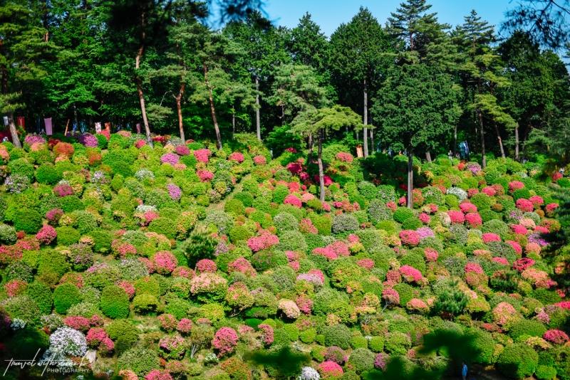 azalea-garden-shiofune-kannon-ji-temple-38
