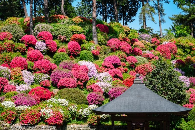 azalea-garden-shiofune-kannon-ji-temple-5