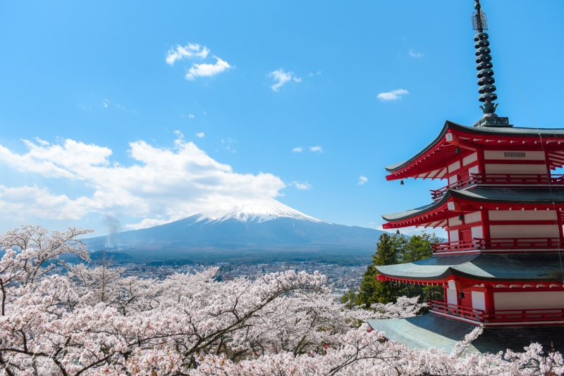 cherry-blossoms-mt-fuji-japan-9