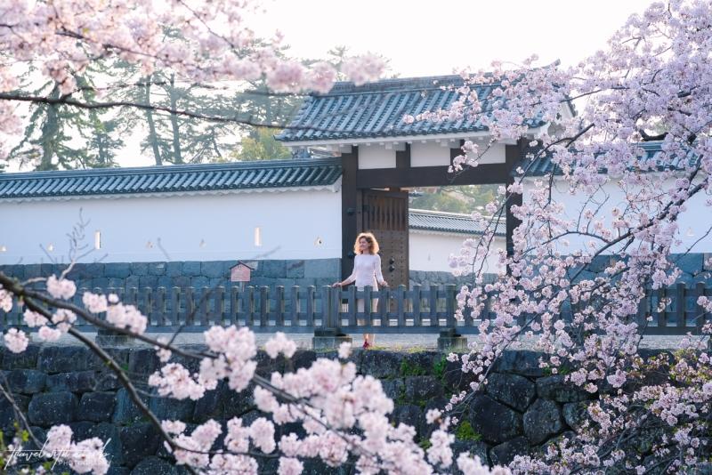 cherry-blossoms-odawara-3