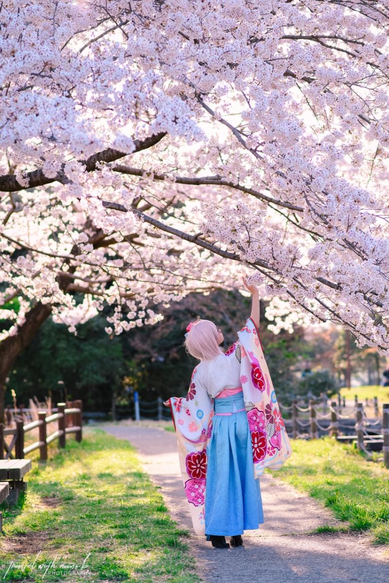 cherry-blossoms-tokyo-29