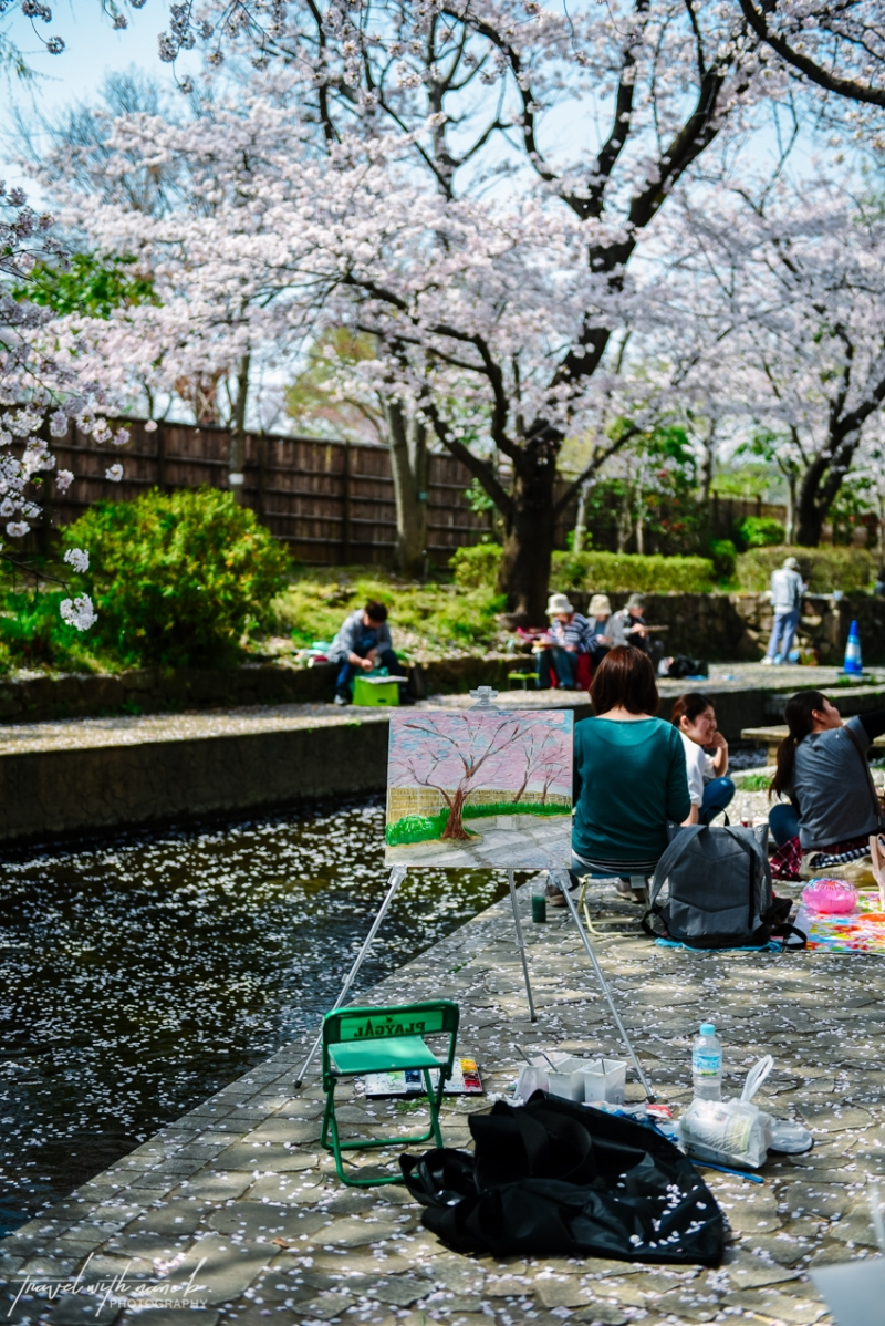 cherry-blossoms-tokyo-32