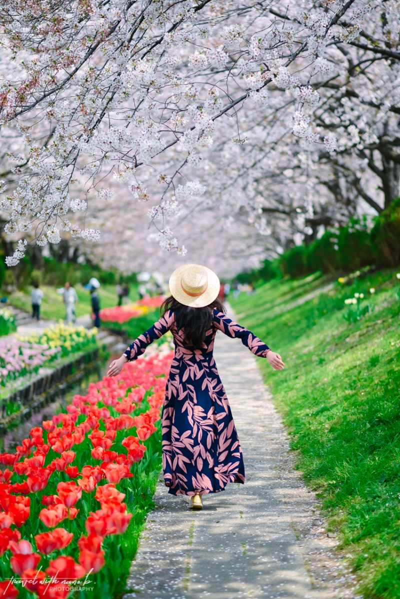 cherry-blossoms-yokohama-6