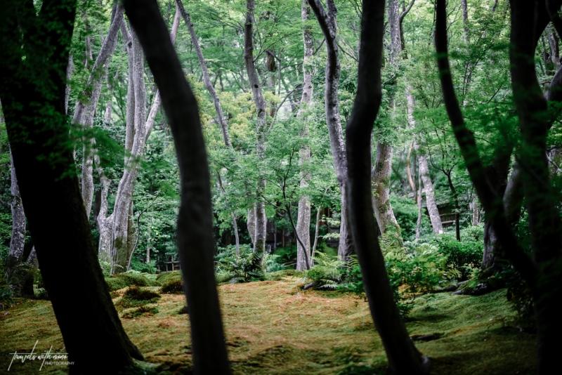 kyoto-secret-gardens-japan-13