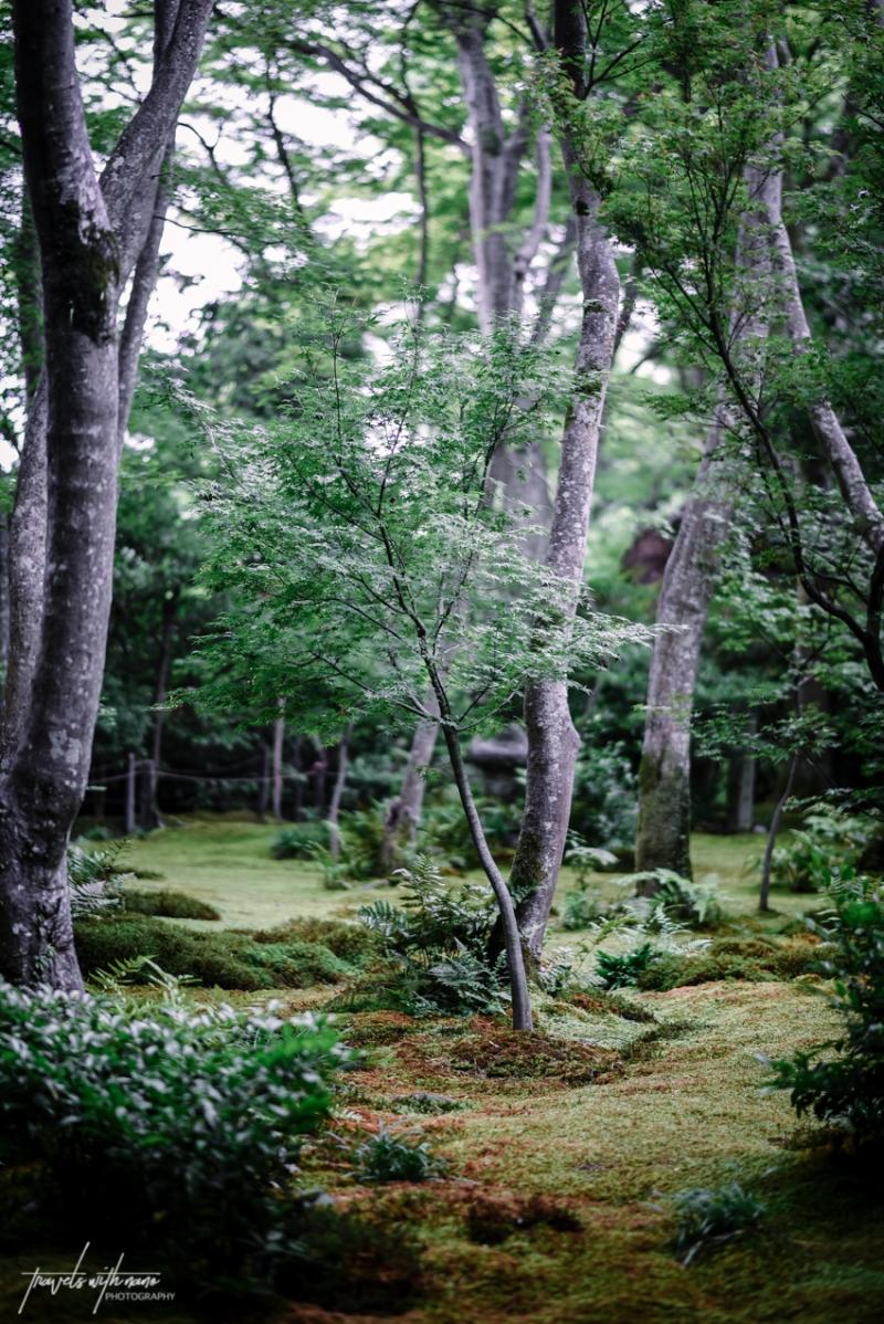 kyoto-secret-gardens-japan-16